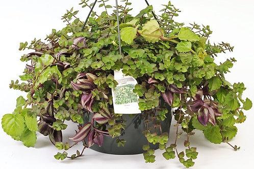 "Mixed Foliage 10/11"" Hanging Basket"
