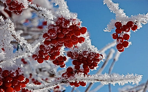 frost.jpg