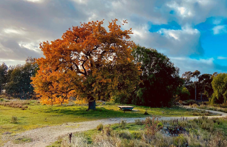 Sunday House - Maldon Photography - South German Mine Tree