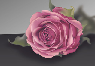 Gradient Mesh Rose