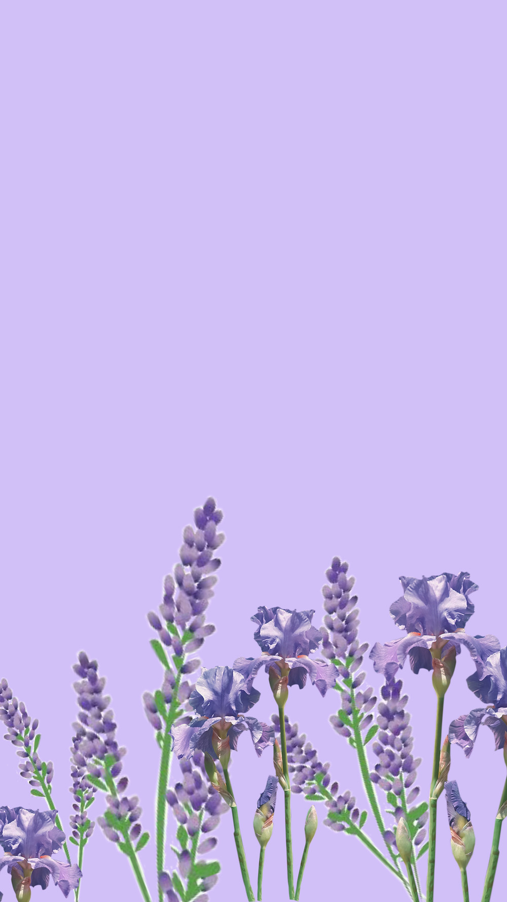 Lavendar Floral Aesthetic iPhone Background, free download.