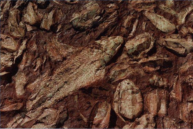 20160716 fossil detail.jpg