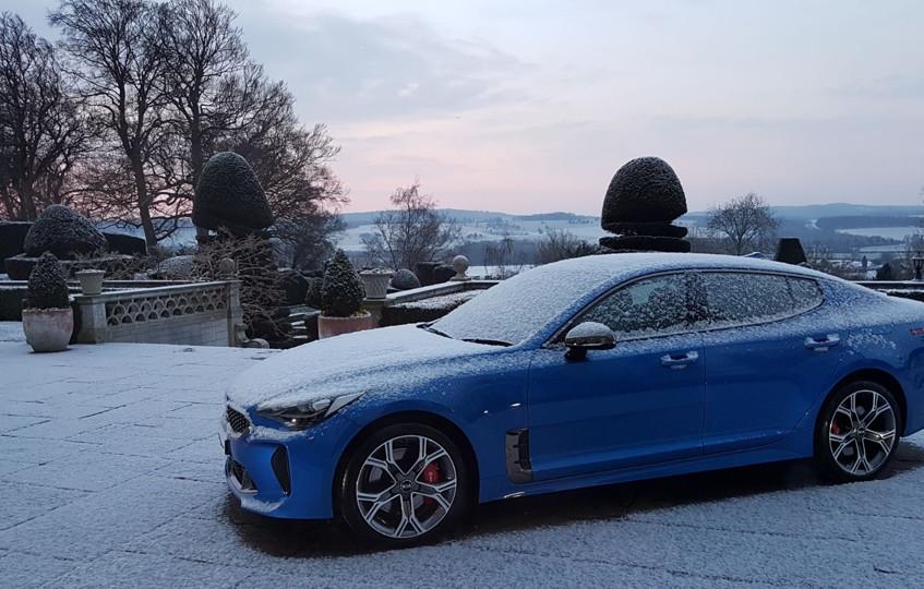 Stinger in the snow