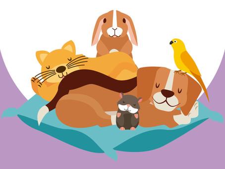Nos animaux de compagnie polluent-ils l'air de nos foyers ?