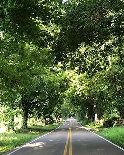 tree lined road copy.jpeg