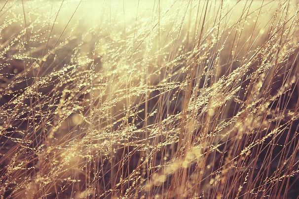 grass-835270.jpg