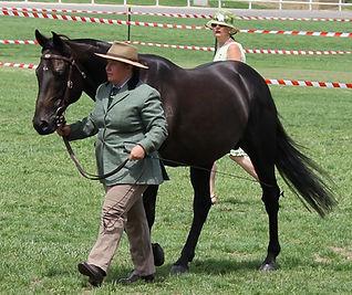 Ophir Abou Aromist Stock Horses