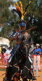 Australian Stock Horses Aromist Capricorn Dancer