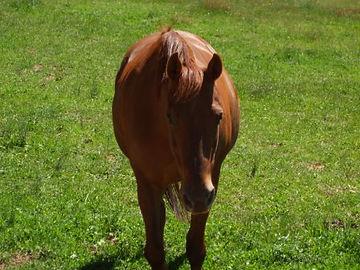 Australian Stock Horses Aromist Cassablanca
