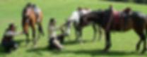 Australian Stock Horses Aromist Charisma, Harmony, Pachelbel
