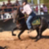Ophir Abou Australian Stock Horses