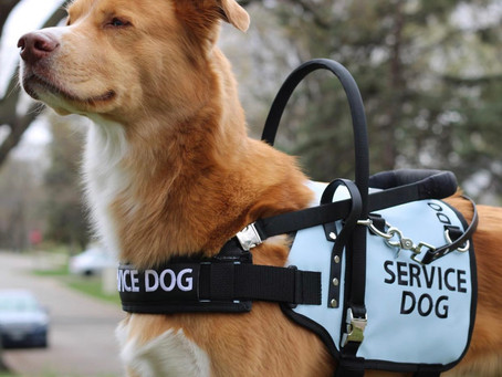 The Pro's & Con's of having a Service Dog