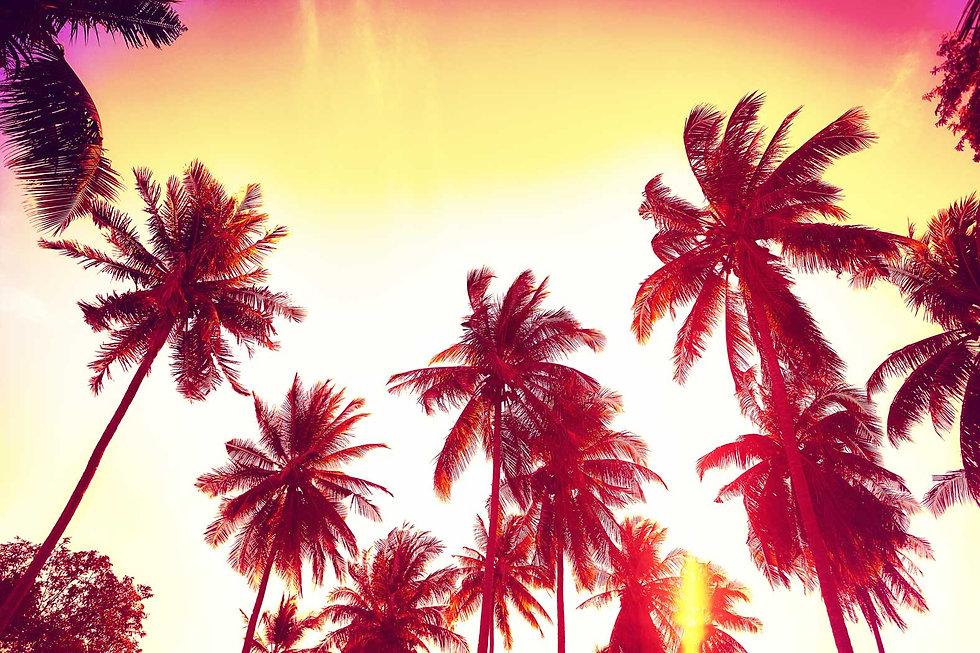 SUNSET-PALM.jpg