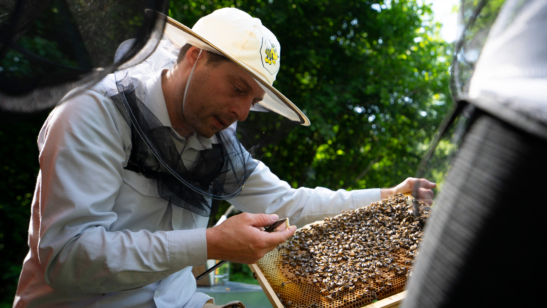 Alla scoperta delle api