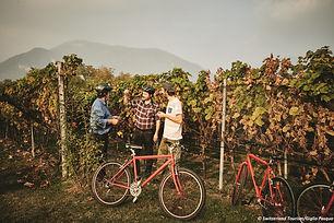 Bike'n'Wine - Copia.jpg