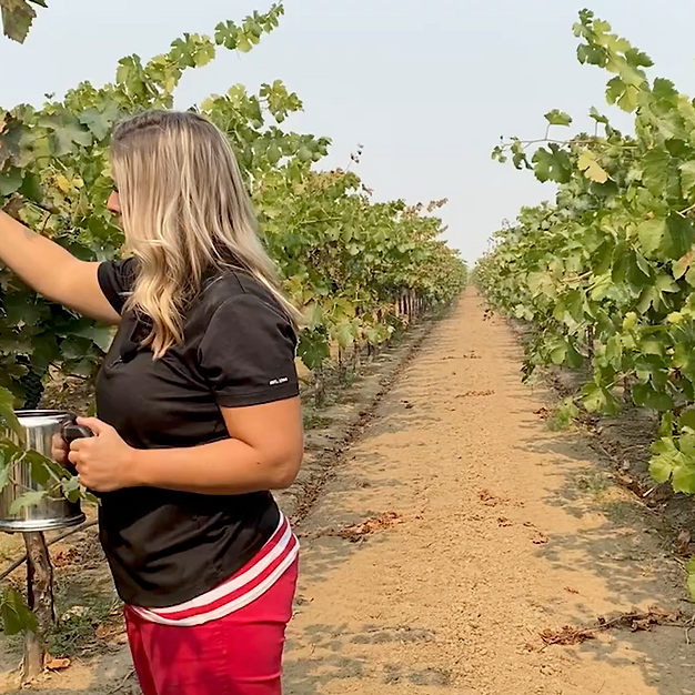 Sugar Testing Wine Grapes