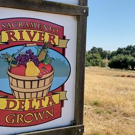 Sacramento River Delta Grown