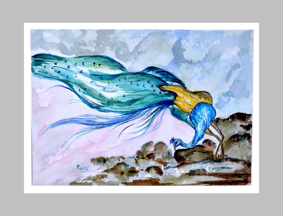 Peacock's Flight