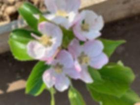 blossom 2020.jpg