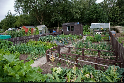 Allotment image.png