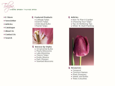 Web Design // Tulipa / Minimalism