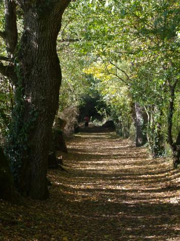 Un sentier proche de la Sèvre à Vertou