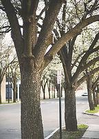 pavement-1839472_1920.jpg