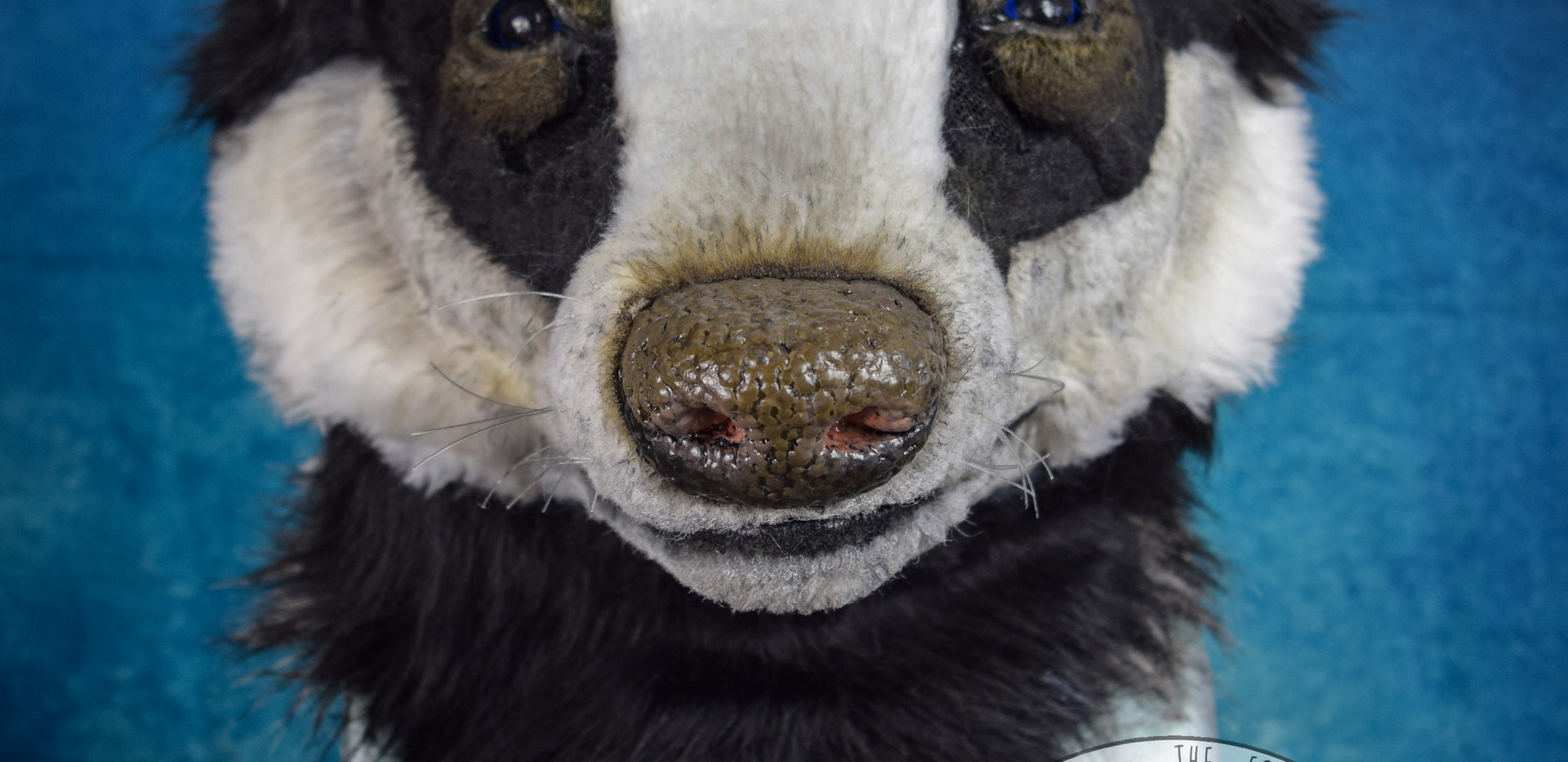 Realistic Badger head