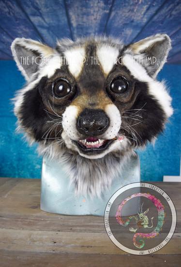 Realistic Racoon head