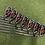 Thumbnail: Wilson Staff D250 Irons 5-GW // Reg