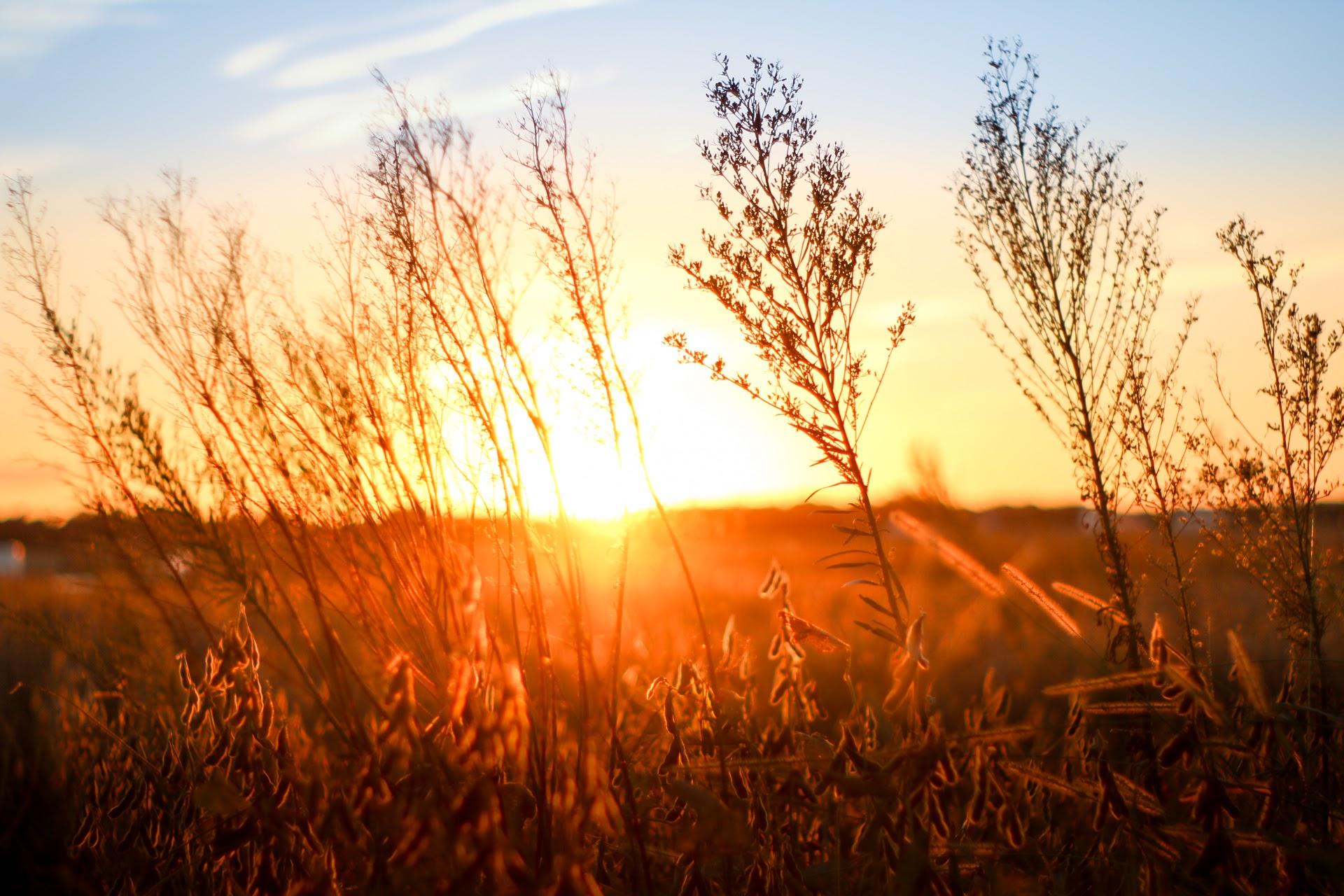 Millchop Sunset-3
