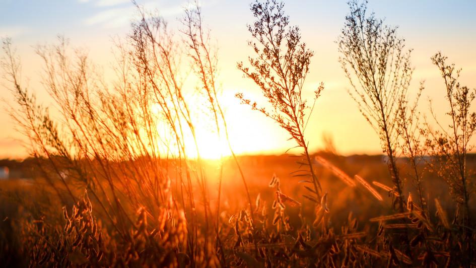 Millchop Sunset