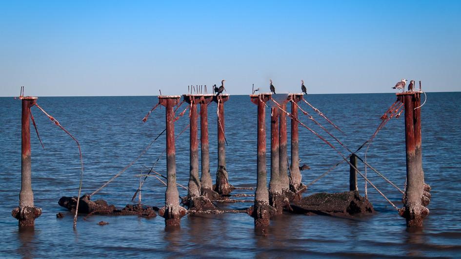 Birds Perching