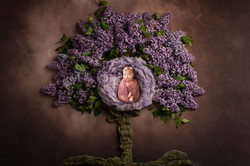 lilac-tree-top-view-brown-download
