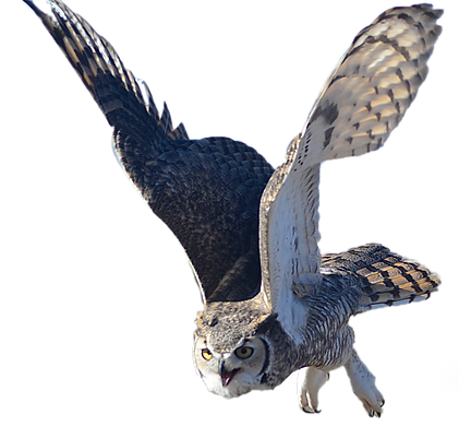 flying owl.png