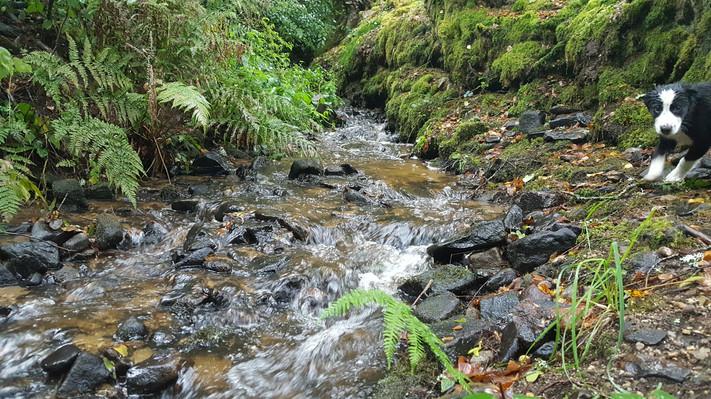 Ruisseau Cabanes