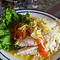 COLOMBIAN FISH OF THE DAY