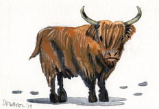 Allen-Spetnagel_Highland-Cow.jpg