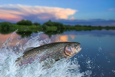 sust fish.jpg