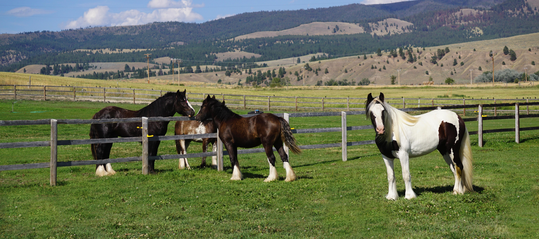 4 horses in Pasture...7:2015.jpeg