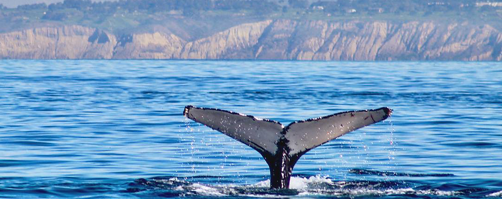 whale watching, loreto, tours, companies, costs