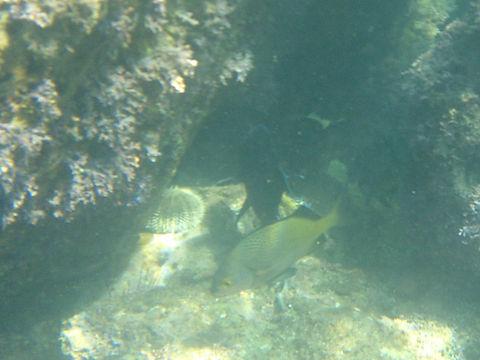 loreto snorkel, snorkeling in loreto, loreto, snorkel
