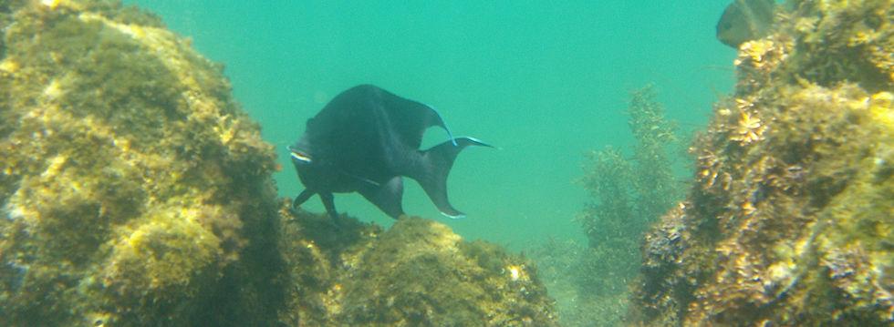 loreto bay snorkeling