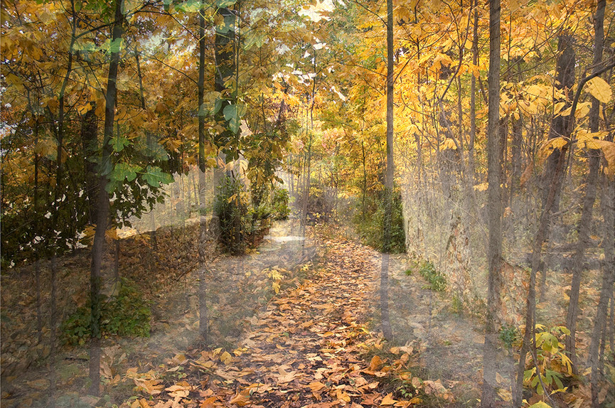 "Holzwege 25 (2009), 22.5 x 34"" digital photomontage/ chromogenic print, limited edition of 3"