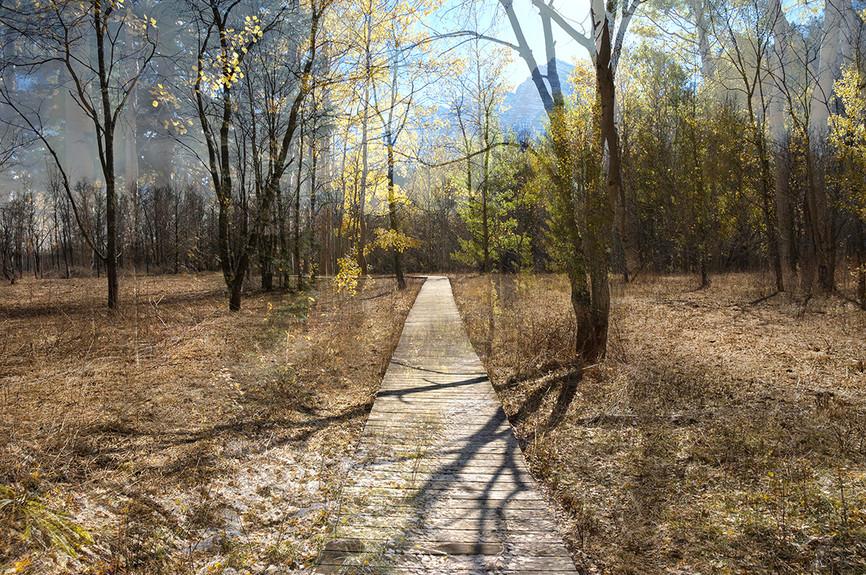 "Holzwege 37 (2011), 22.5 x 34"" digital photomontage/ chromogenic print, limited edition of 3"