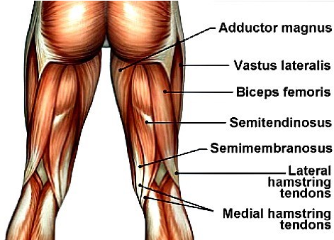 Do Stiff Leg Deadlifts To Build Your Hamstrings and Glutes
