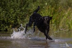 schwarzer-Hund-Wasser-19.8.16-web