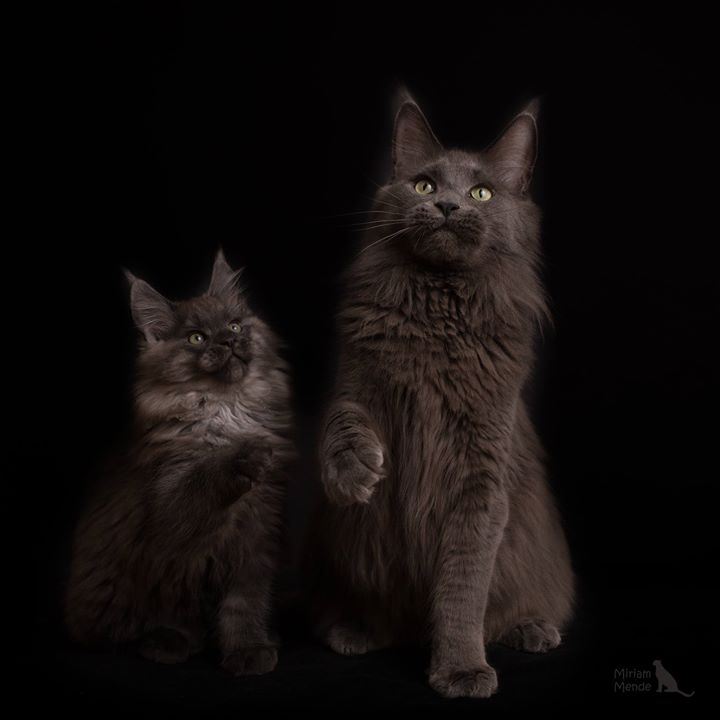 Mama und Sohn _3