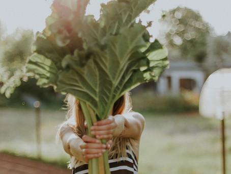 Seasonal Baking - Rhubarb