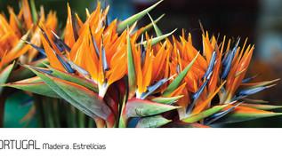 ref.ª 107 | Madeira, Estrelícias